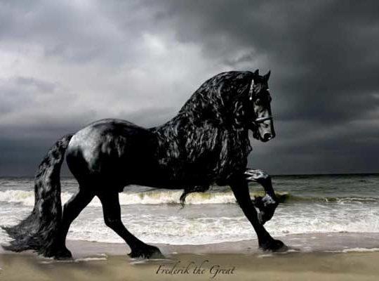 Το αλογο δεν ειναι απλα ενα ζωο…